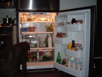 Dog in fridge