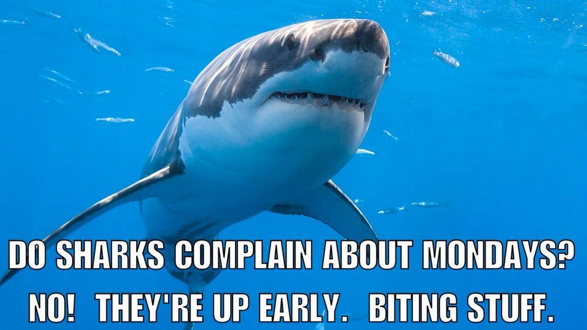 Shark on a monday